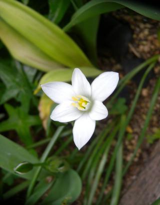 白い花003