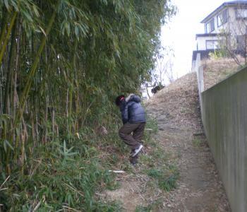 よさそうな竹を探すryo