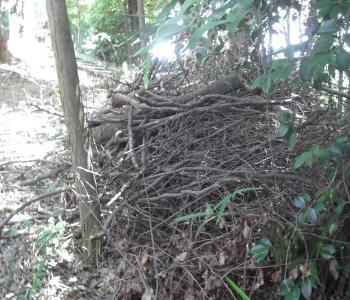 粗朶と伐採木
