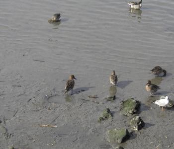 たくさんの鳥