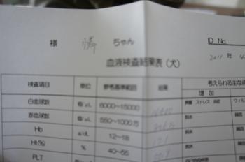 DSC00541_convert_20110420082402.jpg
