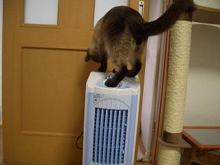 VS冷風扇③