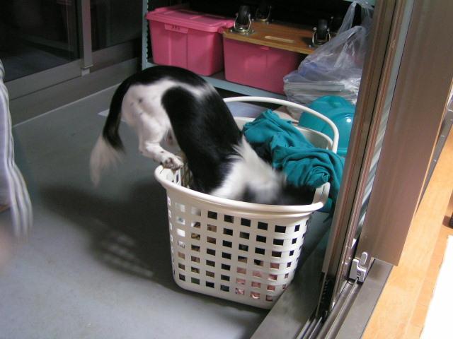 く洗濯物3