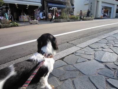 ママと散歩01