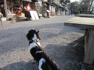 ママと散歩02