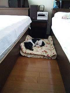 僕のベッド