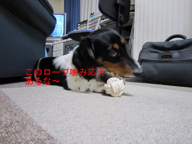 ろーぷ01