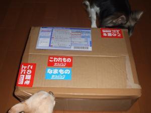 DSCF6174_convert_20080824203258.jpg