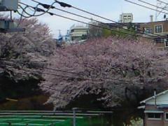 2009.4.5桜3