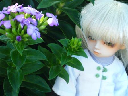 DSCF0177_convert_20090729003615.jpg