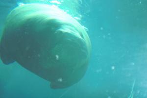 Aquarium-08-004.jpg