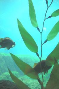 Aquarium-08-010.jpg