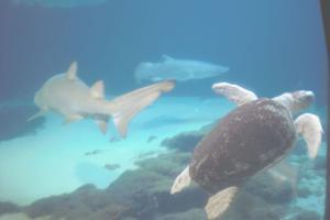 Aquarium-08-015.jpg