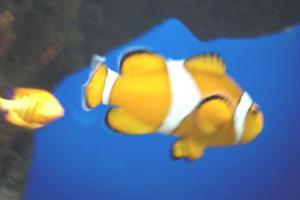Aquarium-08-018.jpg