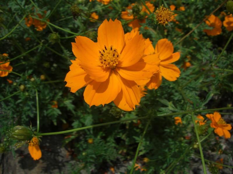 翠波高原2008年8月24日撮影
