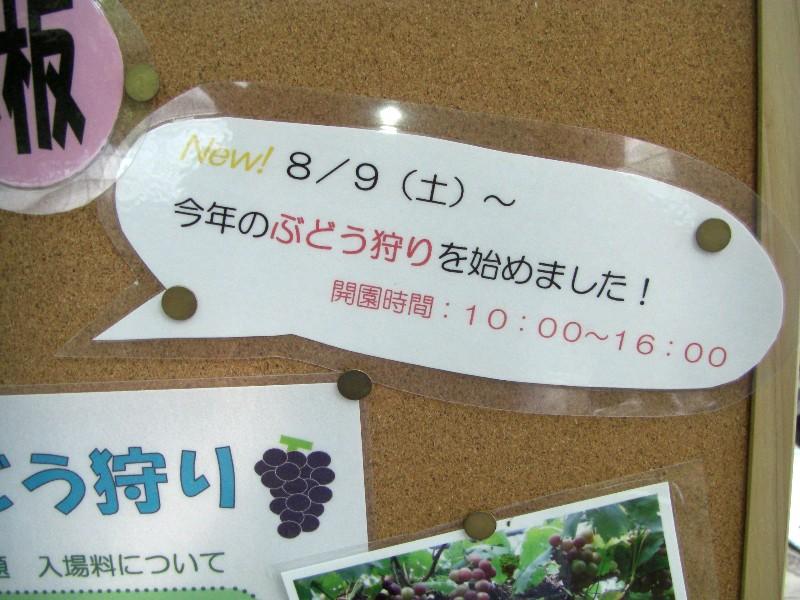 ぶどう園2008年9月7日撮影