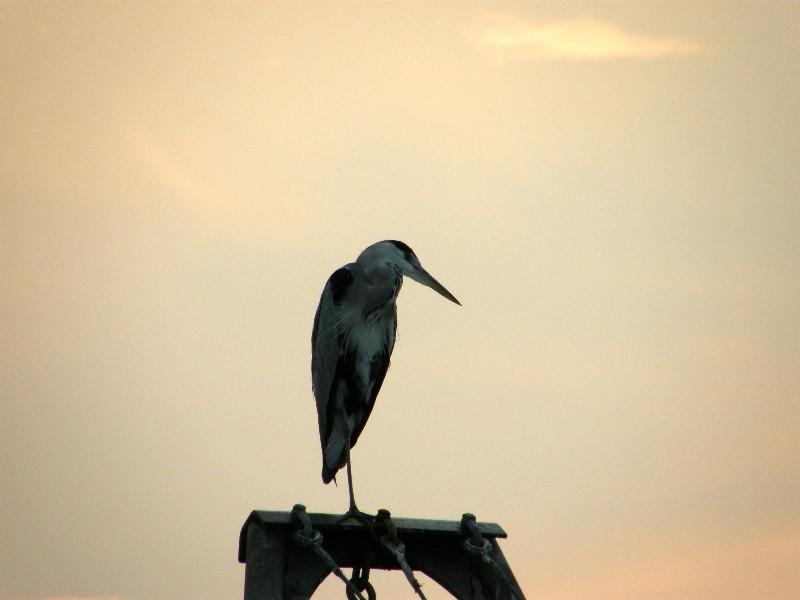 西条港2008年9月14日撮影
