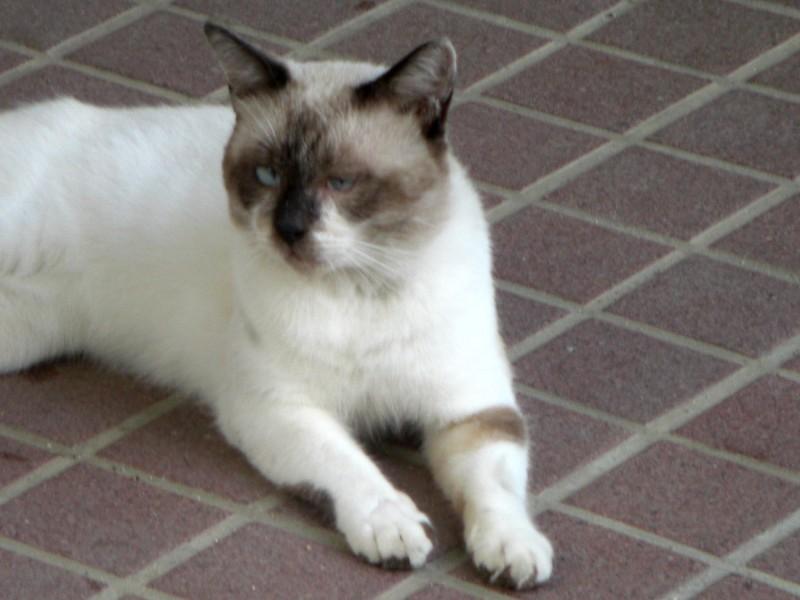 ポーズをとってくれた猫2008年9月3日撮影