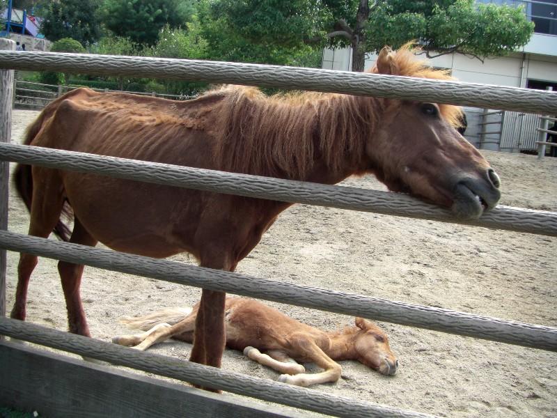 野間馬2008年9月7日撮影