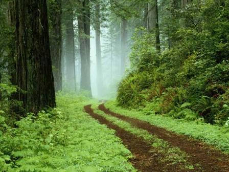 森へ行こう