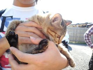 16(猫1)