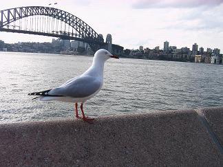 海#40485;和悉尼#26725;前美景