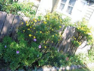 #21035;人家院子的花#22253;