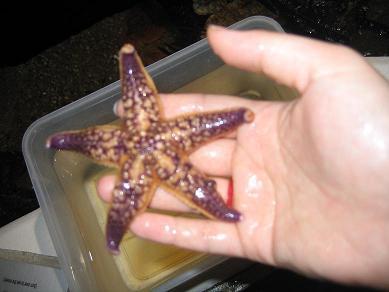我用手拿起了海星!
