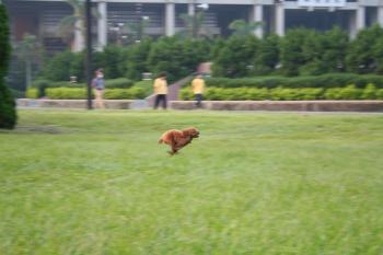 8m 走る!
