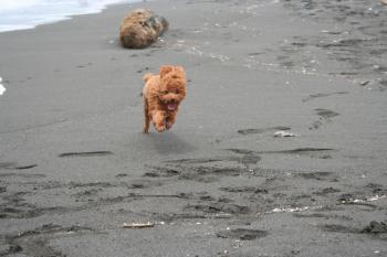 8m 海で走る
