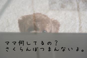 IMG_5874.jpg