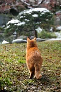 雪見猫 愛ちゃん in 日比谷公園