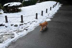 雪猫 愛ちゃん in 日比谷公園