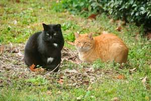ふたり猫@日比谷公園
