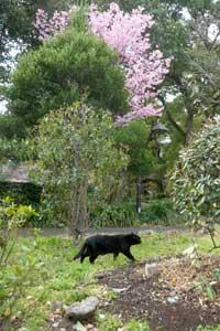 陽光桜猫(黒猫)@日比谷公園