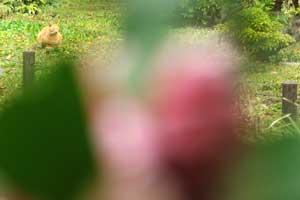 100413-1000410-b1.jpg