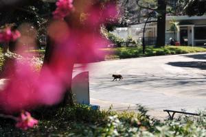 寒緋桜猫 crossing @日比谷公園