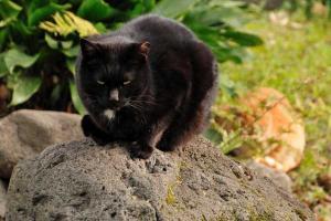 日比谷公園の黒猫とチャトラ猫