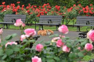 Cats and Roses