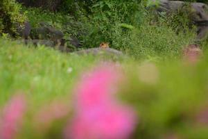 隠れている猫 hiding cat 日比谷公園
