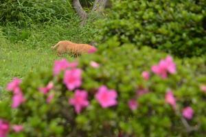 鴨を急襲する猫 attacking cat 日比谷公園