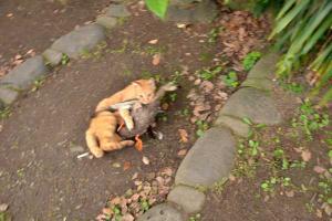鴨を捕まえた猫 cat holding a duck 日比谷公園