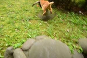 逃げる鴨を追う猫 duck trying to escape 日比谷公園