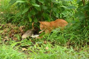 獲物と猫 日比谷公園