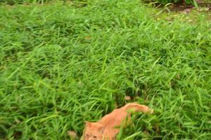 慌てる猫 日比谷公園