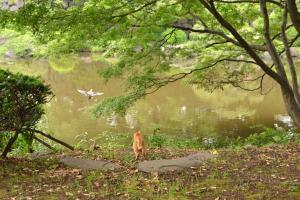 猫と逃げる獲物 日比谷公園