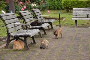 Cat Quartet In Rose Garden