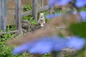110807-Hakodate_Cat-a1.jpg