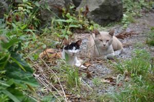 110807-Hakodate_Cat-a2.jpg