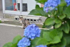110807-Hakodate_Cat-b1.jpg
